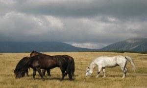 wildlife stock photos