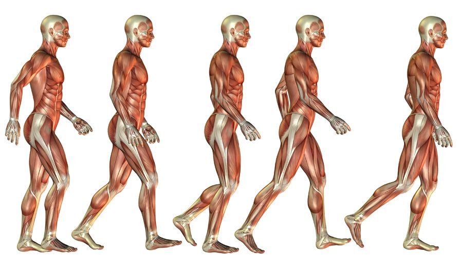 A human body in different forms